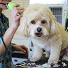 Quality Pet Grooming
