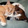 Leslies Pet Purrfections Inc.