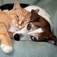 Evolution Diet Pet Food