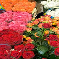 Bernies Floral  Vintage And Gardens
