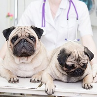 Fort Oglethorpe Pet Wellness Center