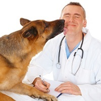 Stanford Veterinary Hospital