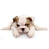 Doggy Spa