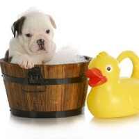 Puppy Love Pet Spa And Grooming