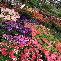 WRF Nursery  Garden Center