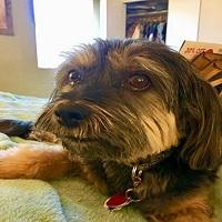 Pawsitivity Salon And Pet Services, Zusias LLC