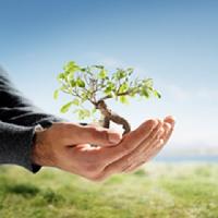 Ken Lamb Tree Service, LLC